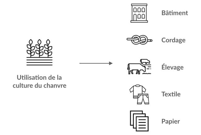 Les différentes utilisations du chanvre (tige, feuille, et graine)