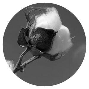 Coton biologique - GoudronBlanc